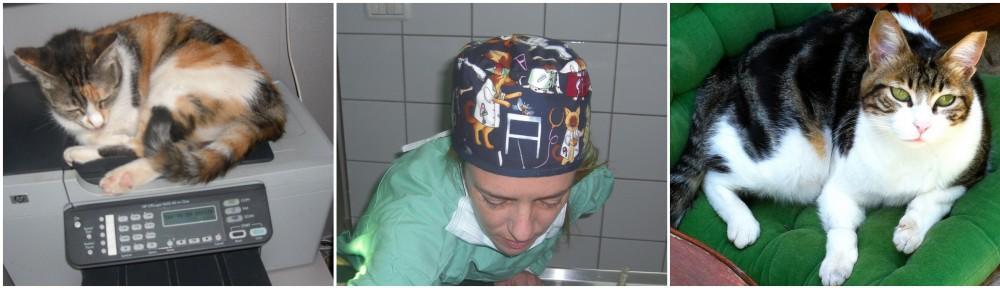 """ד""""ר שירלי פורמנסקי Dr. Shirley Furmanski DVM DABVP"""